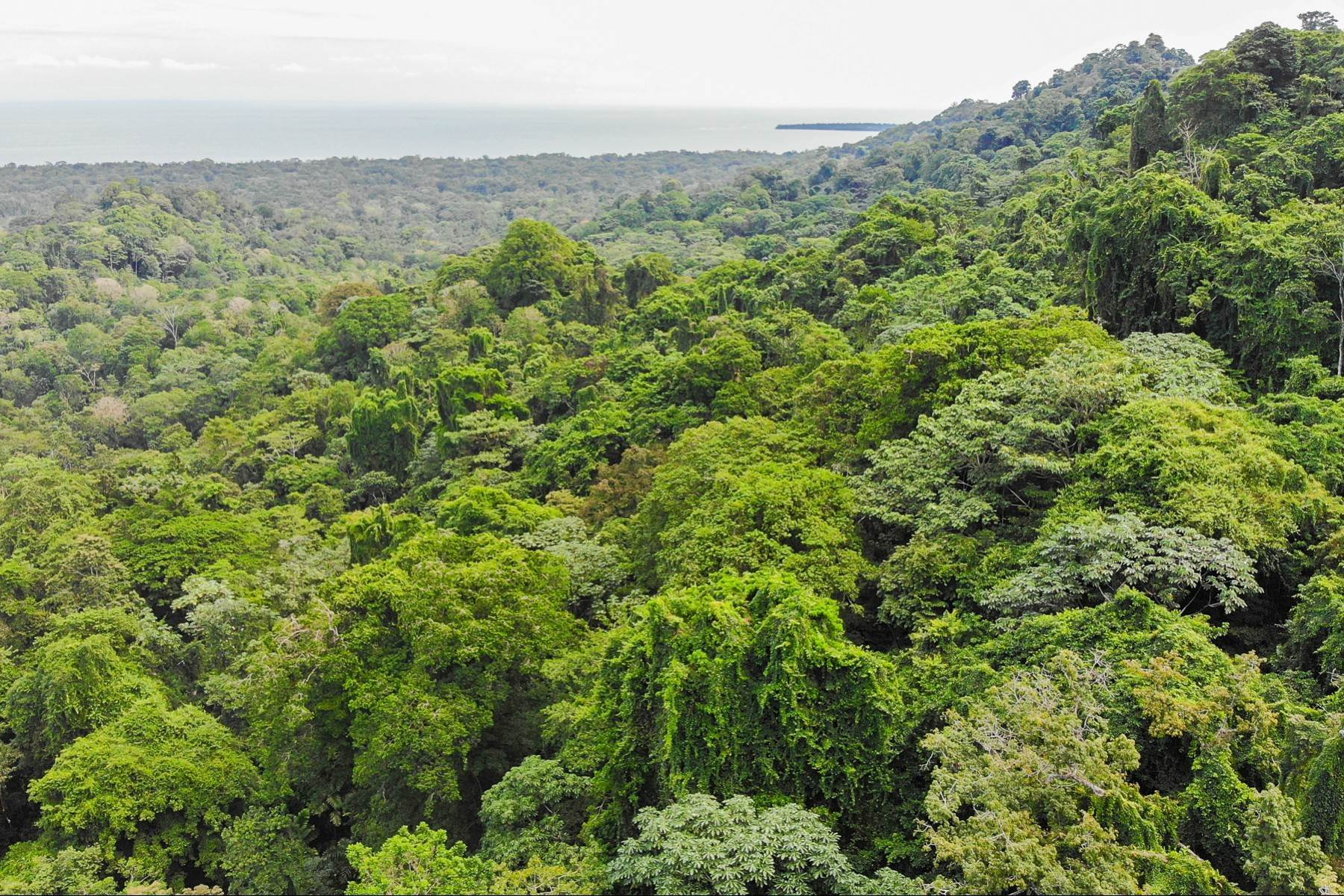 Land for Sale at Cahuita Ocean and Jungle View Farm / Development (20ha) Other Limon, Limon Costa Rica