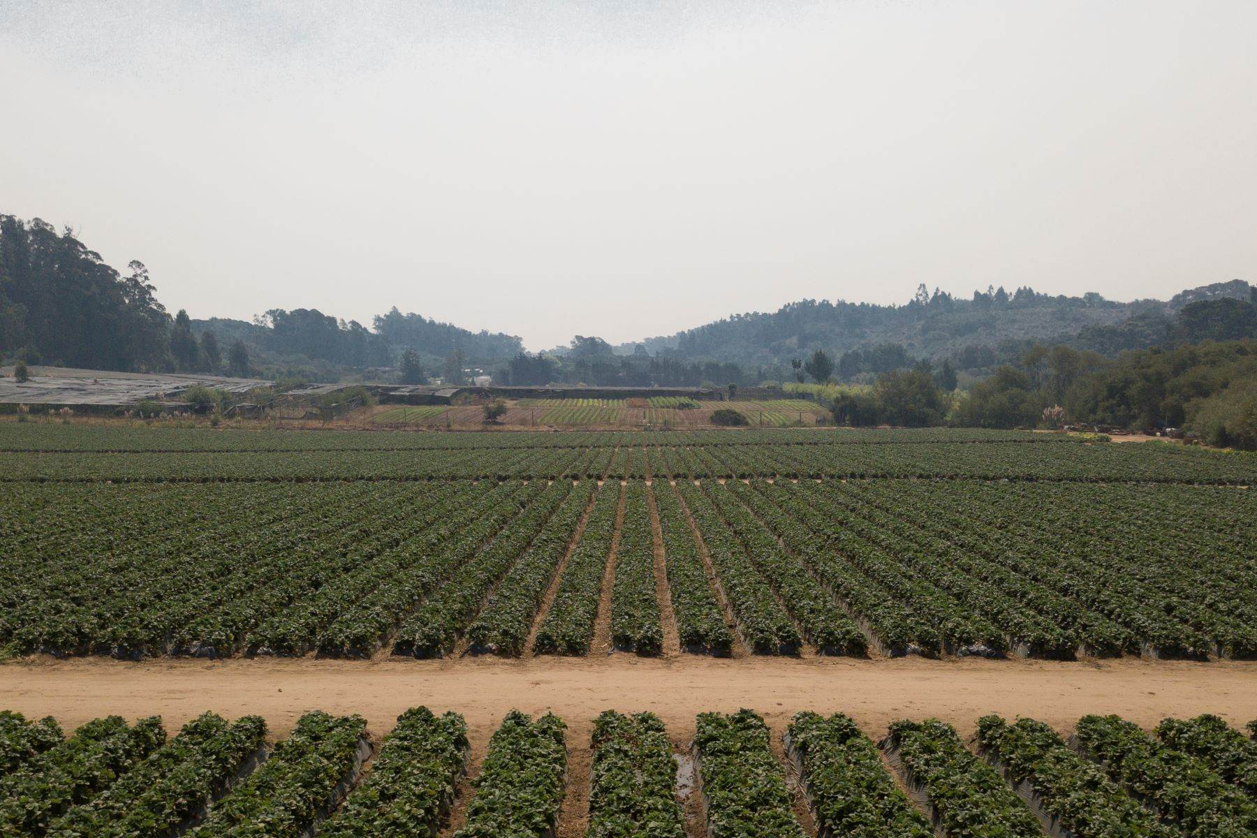 Vineyard Real Estate 為 出售 在 Strawberry Fields Forever 215 Spring View Road La Selva Beach, 加利福尼亞州 95076 美國